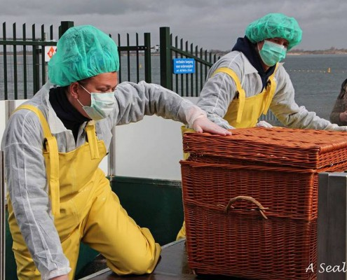 zeehondenverzorgers