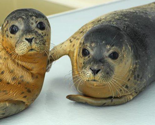 2-zeehonden
