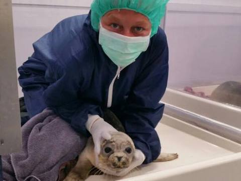 Viona van den Berg, zeehondenverzorgster