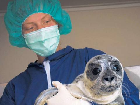 Anne-Nel Breen, zeehondenverzorgster