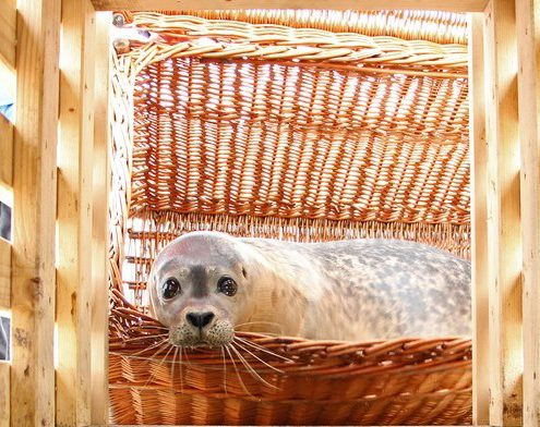 20161119-vrijlating-sealo-dorus-ouddorp-ard-teijn-000